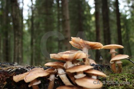Green fungus mushroom toadstool.