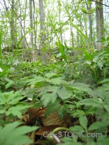 Green ground forest.