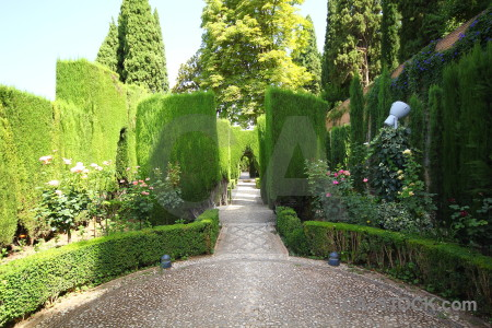 Green hedge la alhambra de granada garden pathway.
