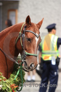 Green horse animal.