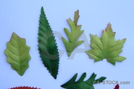 Green leaf object flower plant.