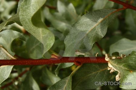 Green leaf plant.