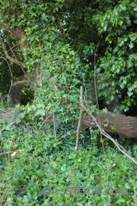 Green leaf tree branch.