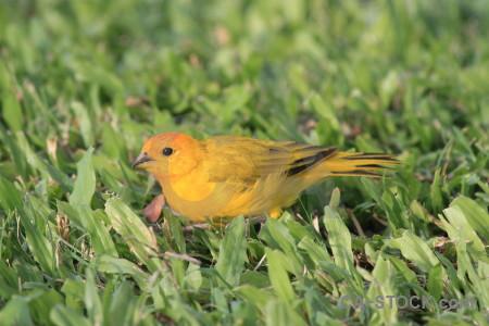Green orange bird yellow animal.