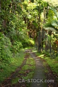 Green path.