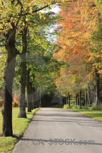 Green path orange yellow tree.