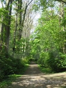 Green path tree.