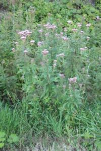 Green plant flower.