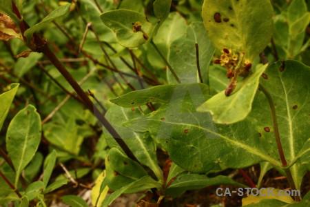 Green plant leaf.