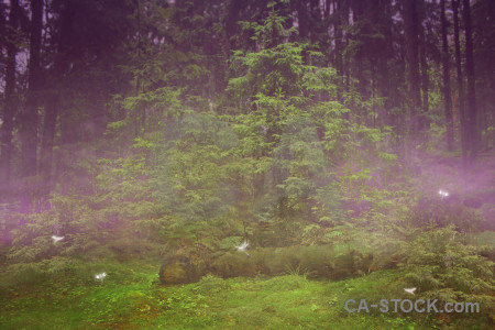 Green purple backgrounds premade fantasy.