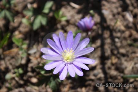 Green purple plant flower.