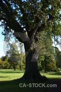 Green single tree black.