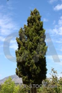 Green spain blue tree algar.
