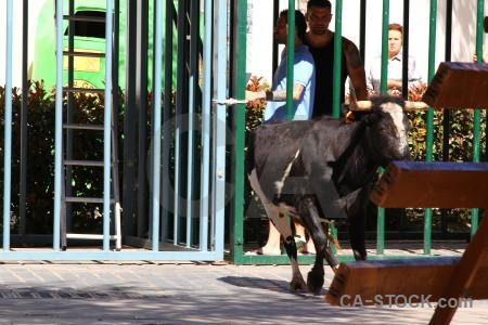Green spain person bull animal.