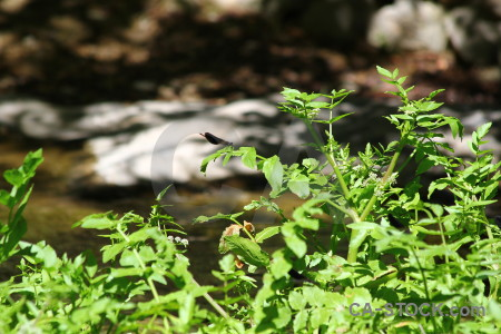 Green spain plant leaf europe.