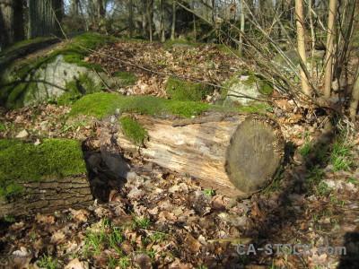 Green stump brown tree.