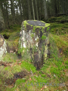 Green stump tree.