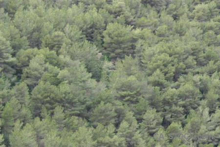Green texture tree.