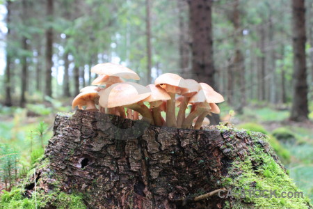 Green toadstool mushroom fungus.