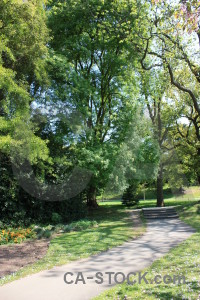 Green tree.