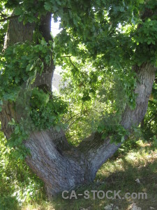 Green tree branch leaf.