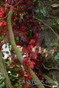 Green tree branch leaf red.