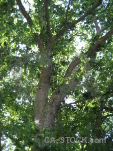 Green tree leaf branch.