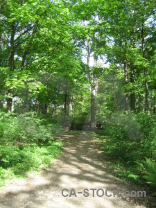 Green tree path.