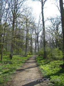 Green tree path white.