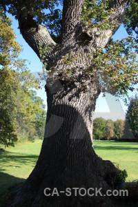 Green tree single.