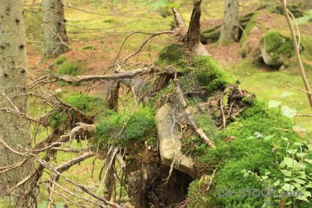 Green tree stump.