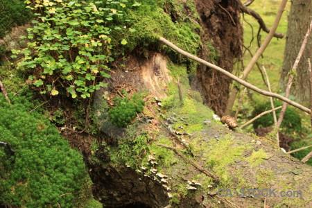Green tree stump brown.