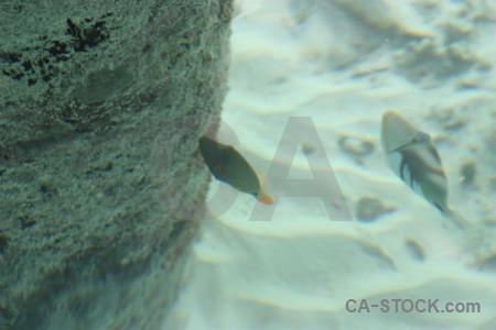Green underwater fish animal.
