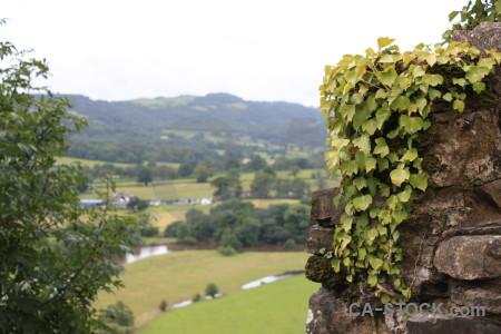 Green white field rock landscape.