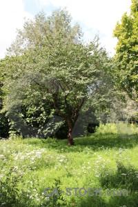 Green white tree.