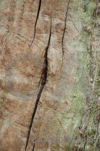 Green wood bark texture.