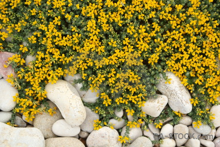 Green yellow nature white texture.