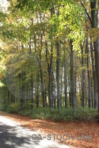 Green yellow tree path.