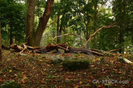 Ground forest brown leaf green.