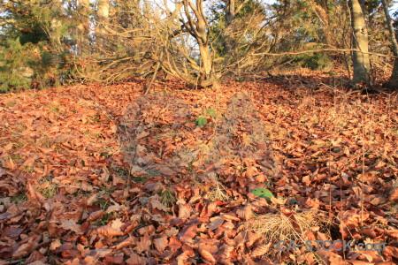 Ground forest brown red orange.