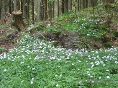 Ground forest green.