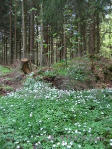 Ground green forest.