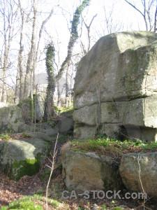 Ground green rock white forest.