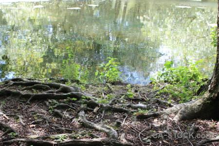 Ground root tree green.