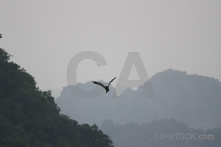 Ha long bay animal island bird southeast asia.
