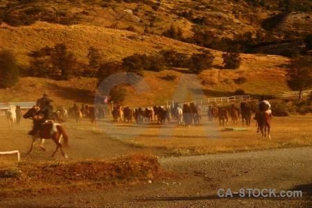 Herd horse torres del paine patagonia circuit trek.