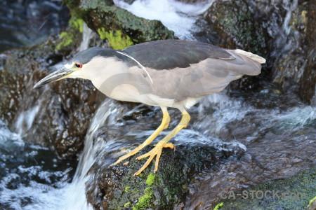 Heron bird animal.