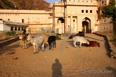 Hindu jaipur archway animal galtaji.