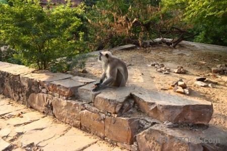 Hindu south asia tree temple india.