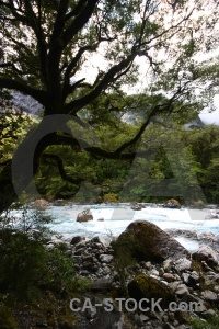Hollyford river new zealand tree forest rock.